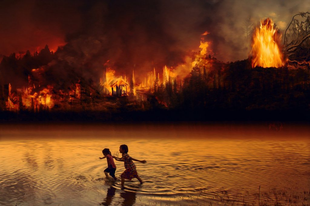 The Amazon Is (Still) Burning. Cheap Meat Is to Blame